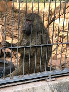 باماکو-باغ-وحش-مالی-Zoo-National-du-Mali-375007