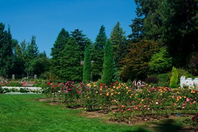 سیاتل-باغ-وحش-وودلند-Woodland-Park-and-Rose-Garden-328546