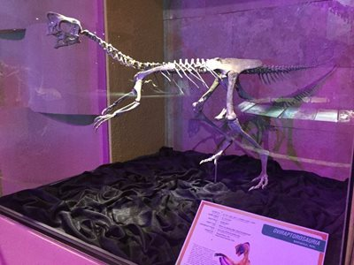 اولان-باتور-موزه-مرکزی-دایناسورها-Central-Museum-of-Mongolian-Dinosaurs-336333