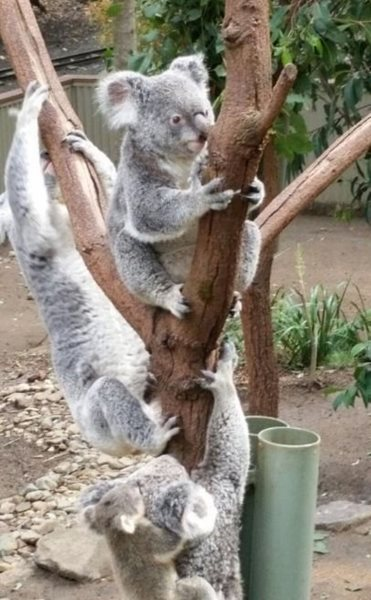 پارک طبیعت Currumbin Wildlife Sanctuary