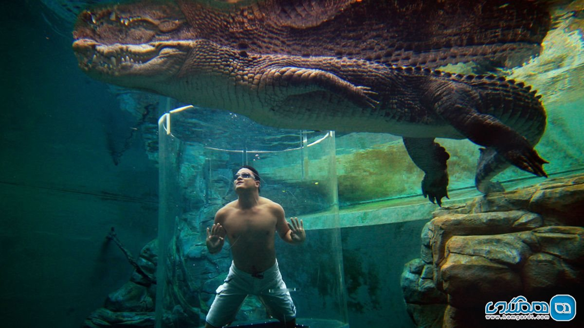 Crocosaurus Cove, Darwin City استرالیا2