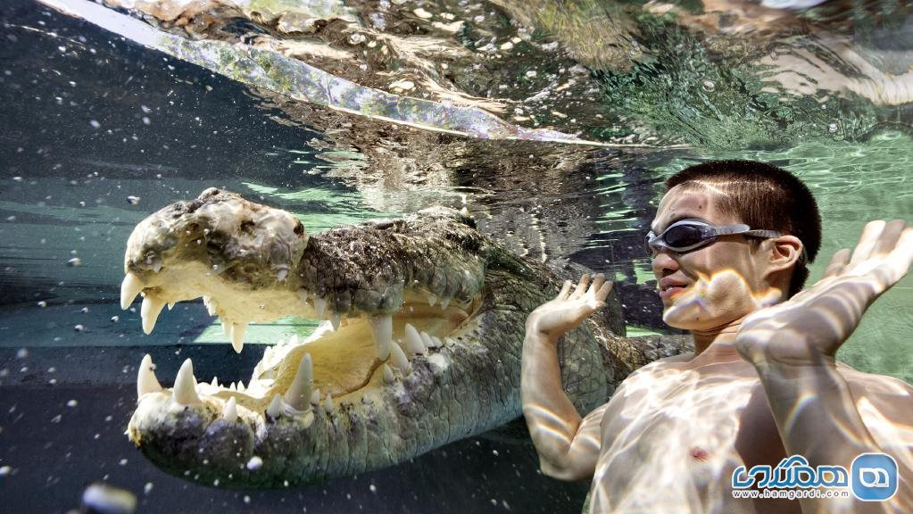 Crocosaurus Cove, Darwin City استرالیا